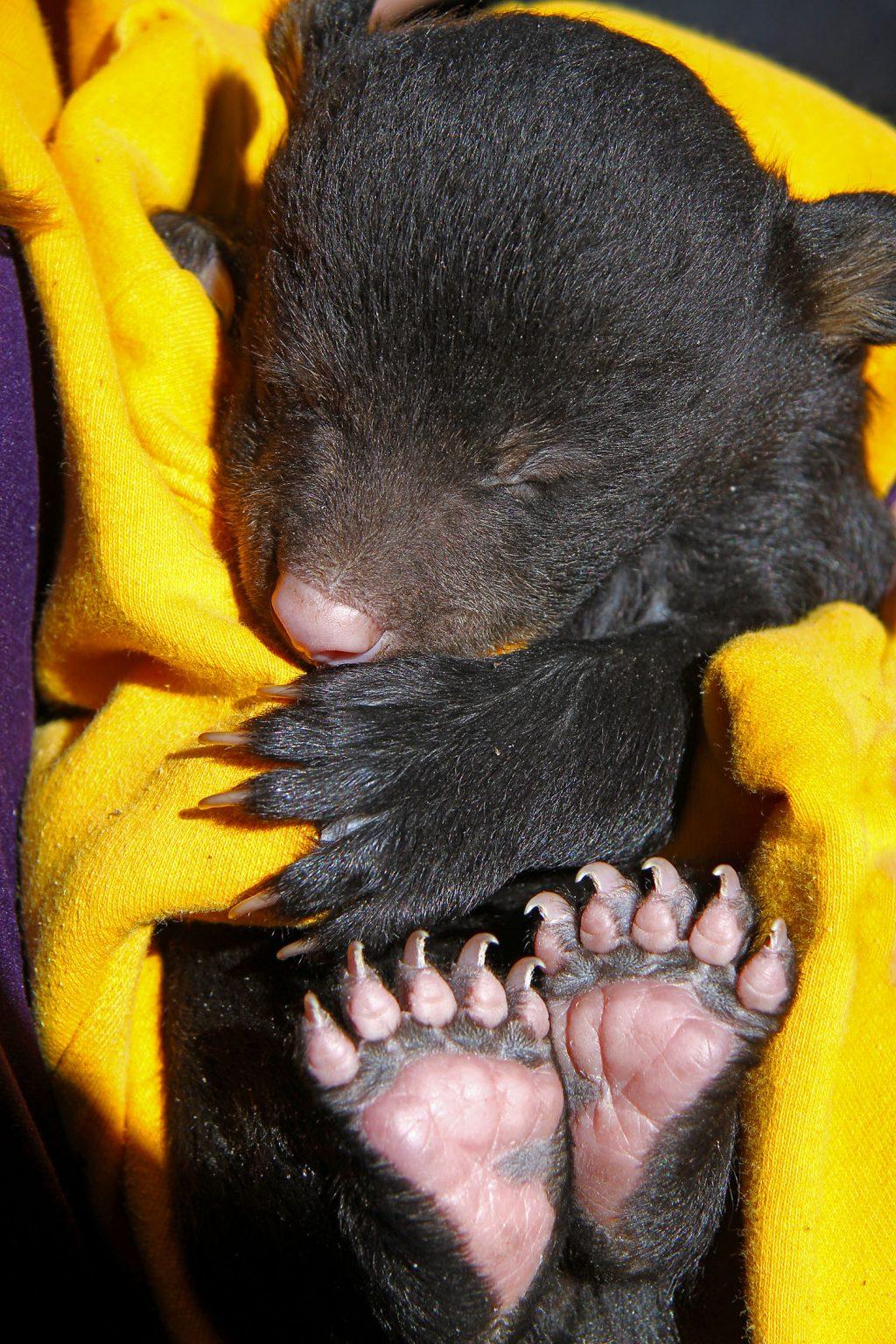 Bear_Cub edit.jpg